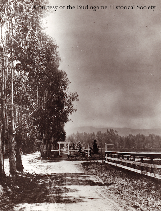 Eucalyptus trees in 1890 on Burlingame Avenue, near where the Rec Center stands today.